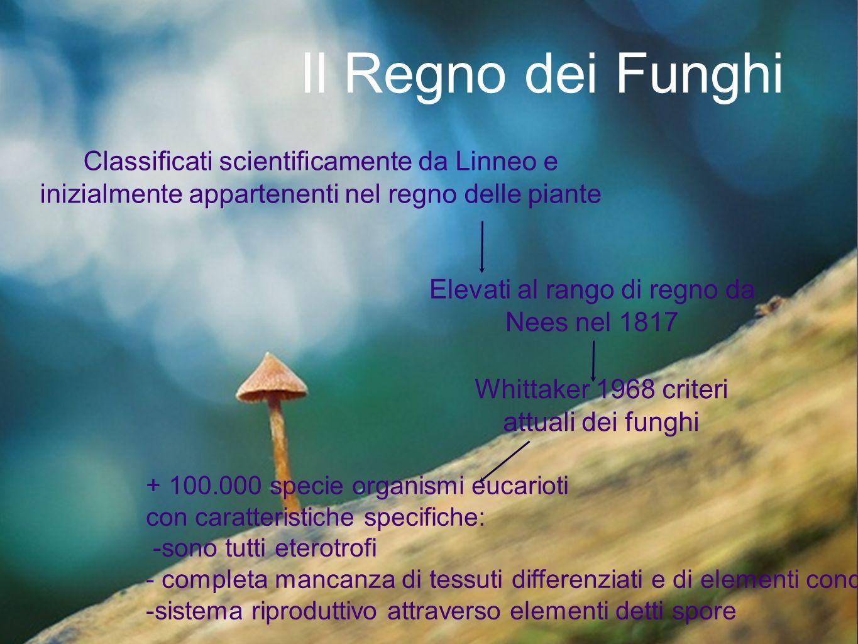 Il Regno dei Funghi Classificati scientificamente da Linneo e inizialmente appartenenti nel regno delle piante Elevati al rango di regno da Nees nel 1