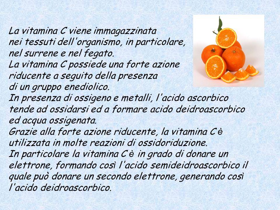 La vitamina C viene immagazzinata nei tessuti dell'organismo, in particolare, nel surrene e nel fegato. La vitamina C possiede una forte azione riduce