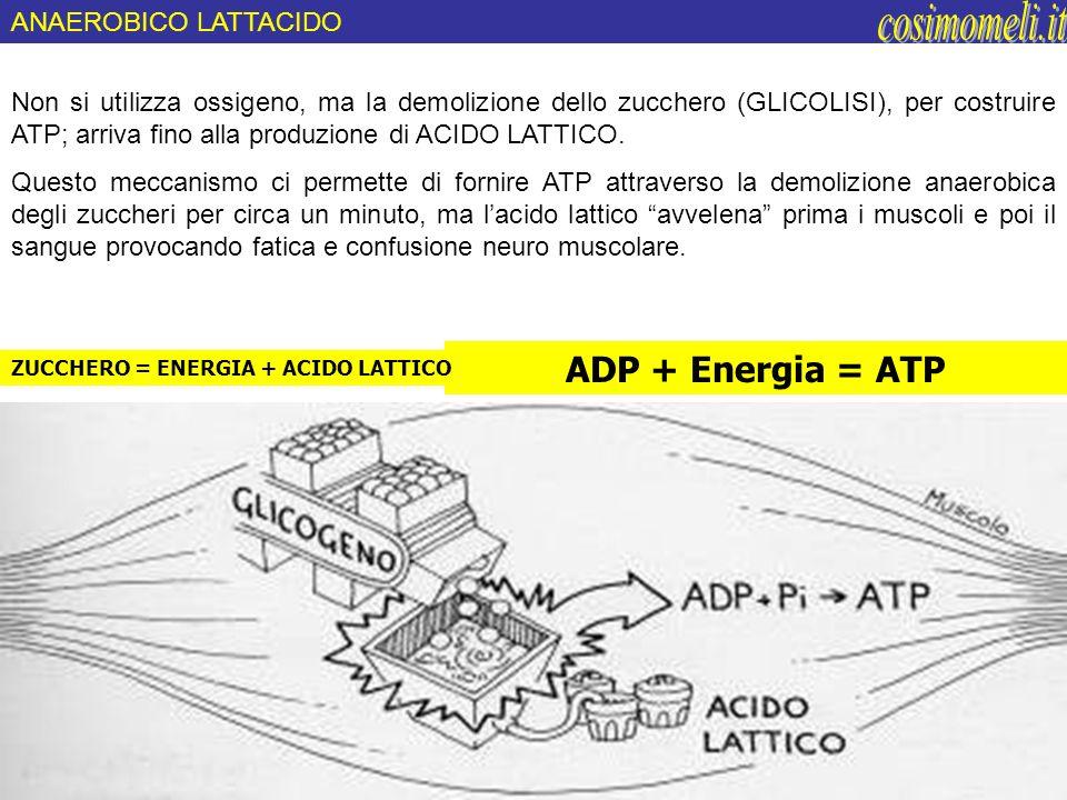 Non si utilizza ossigeno, ma la demolizione dello zucchero (GLICOLISI), per costruire ATP; arriva fino alla produzione di ACIDO LATTICO. Questo meccan