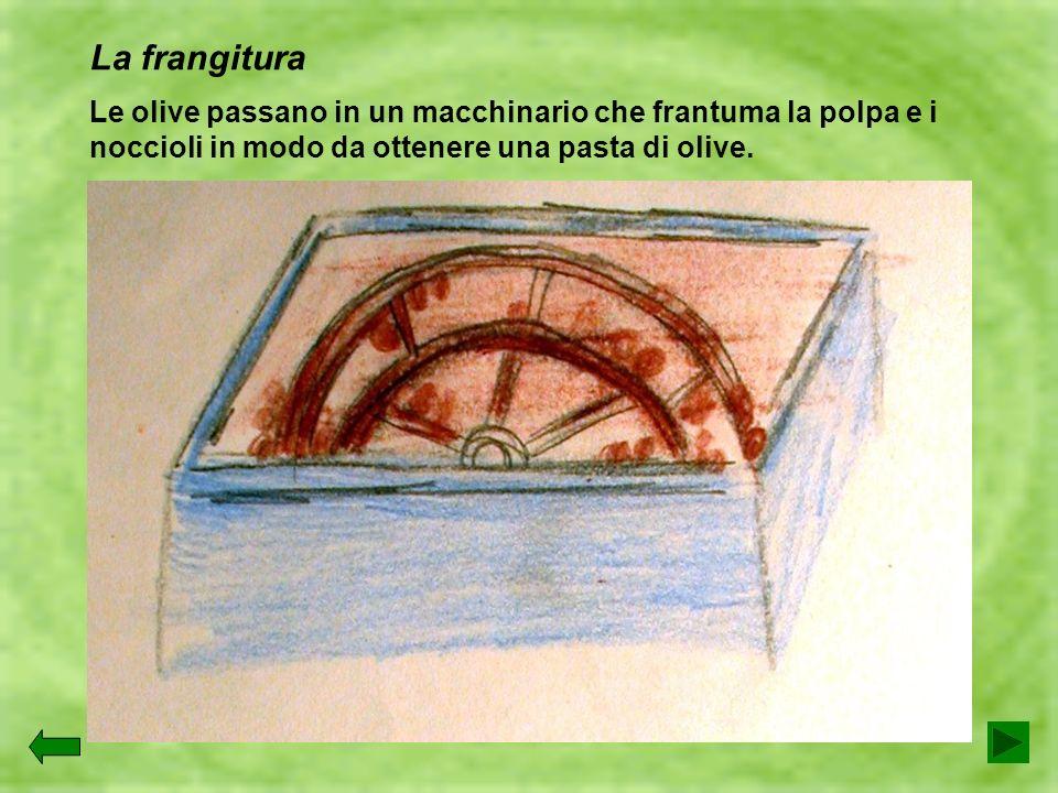 La frangitura Le olive passano in un macchinario che frantuma la polpa e i noccioli in modo da ottenere una pasta di olive.