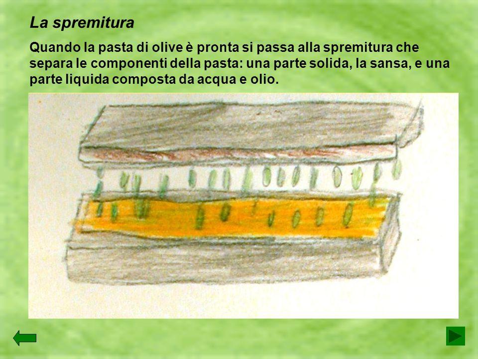 La spremitura Quando la pasta di olive è pronta si passa alla spremitura che separa le componenti della pasta: una parte solida, la sansa, e una parte