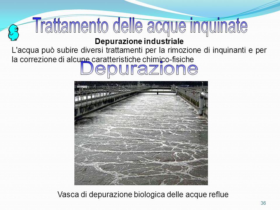 35 Nelle acqua si trovano dei microrganismi che si nutrono dei composti organici provenienti da organismi morti, liquami, ecc.