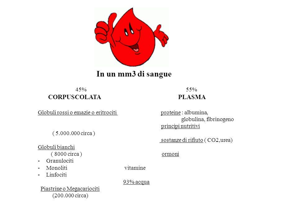 In un mm3 di sangue 45% 55% CORPUSCOLATA PLASMA Globuli rossi o emazie o eritrociti proteine : albumina, globulina, fibrinogeno principi nutritivi ( 5