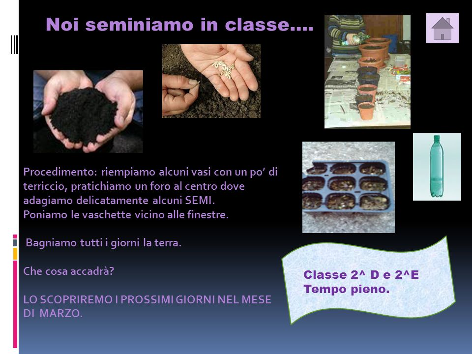 Noi seminiamo in classe….Classe 2^ D e 2^E Tempo pieno.