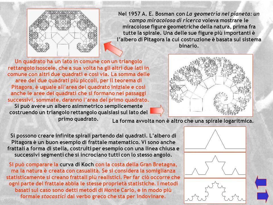 I frattali in Natura Le spirali sono alla base del mondo vivente. Il nucleo cellulare è costituito da una lunga catena a spirale, il DNA, riportante l