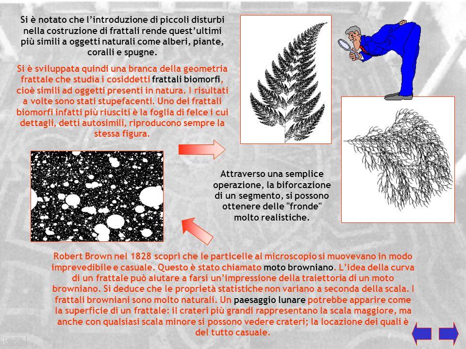 La forma avvolta non è altro che una spirale logaritmica. Nel 1957 A. E. Bosman con La geometria nel pianeta: un campo miracoloso di ricerca voleva mo