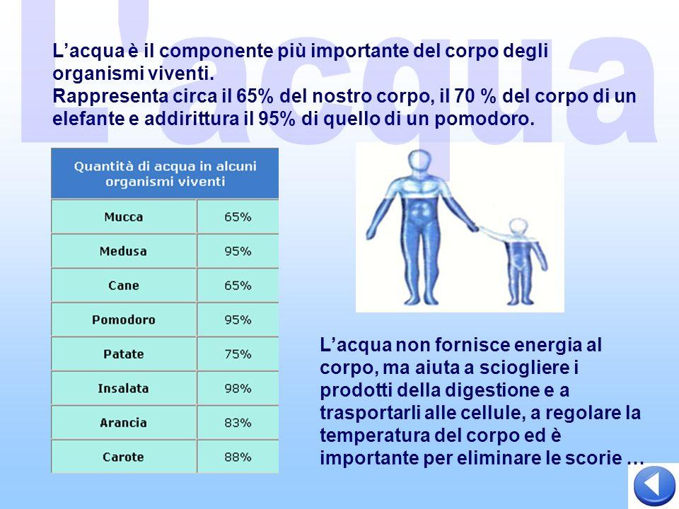 Lacqua è il componente più importante del corpo degli organismi viventi.