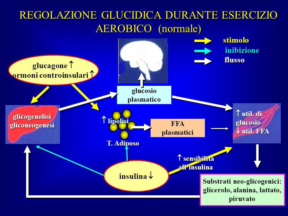 T. Adiposo glucagone ormoni controinsulari FFA plasmatici glicogenolisigliconeogenesi glucosio plasmatico stimolo inibizione flusso REGOLAZIONE GLUCID