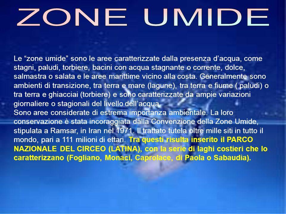 LATINA Latina, città di recente fondazione, può essere localizzata, sulla Tabula Peuntingeriana, lungo la linea costiera del Lazio, ad Est rispetto Ro