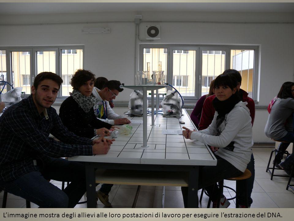 Limmagine mostra degli allievi alle loro postazioni di lavoro per eseguire lestrazione del DNA.