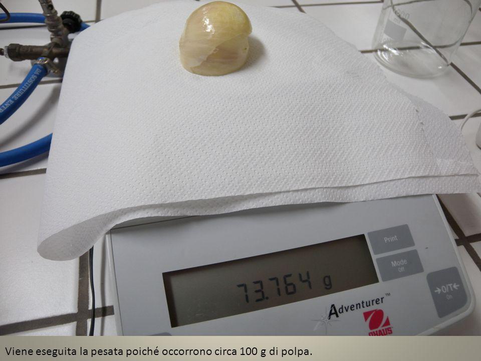 Viene eseguita la pesata poiché occorrono circa 100 g di polpa.