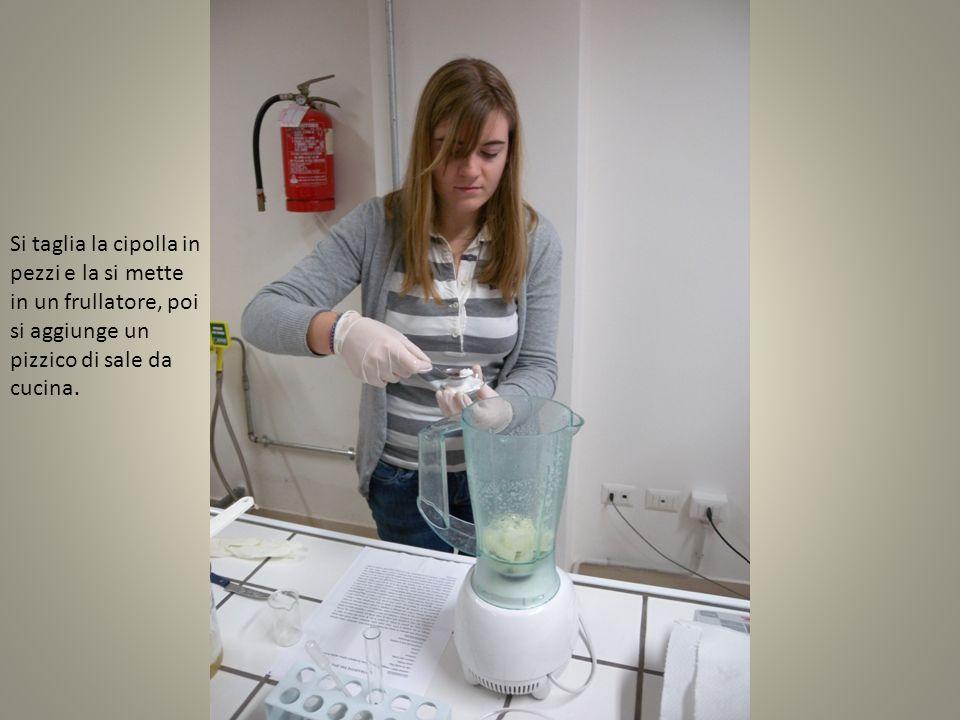 Con un becher si prelevano circa 200 ml di acqua del rubinetto da versare nel frullatore.