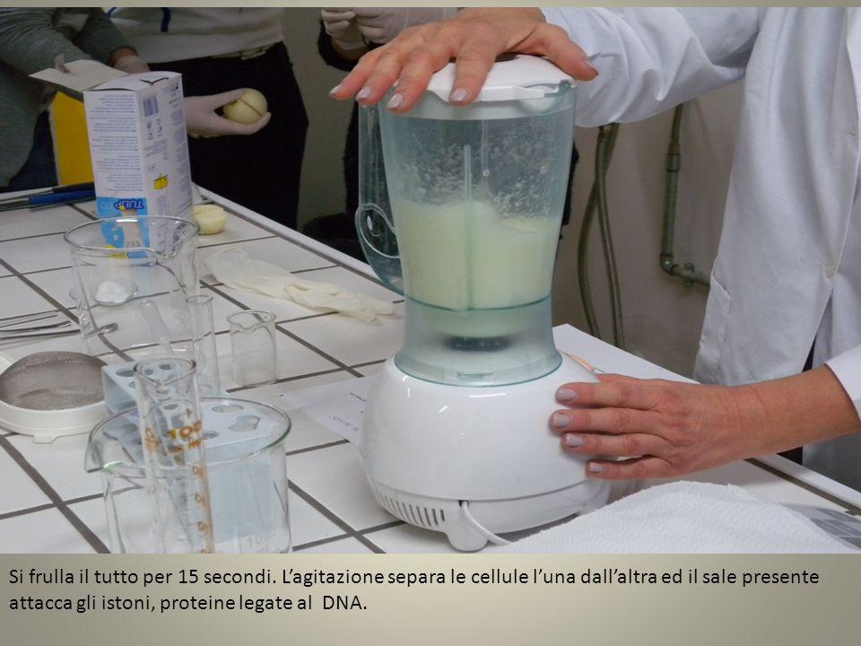 Il miscuglio viene filtrato utilizzando un colino ed un becher.