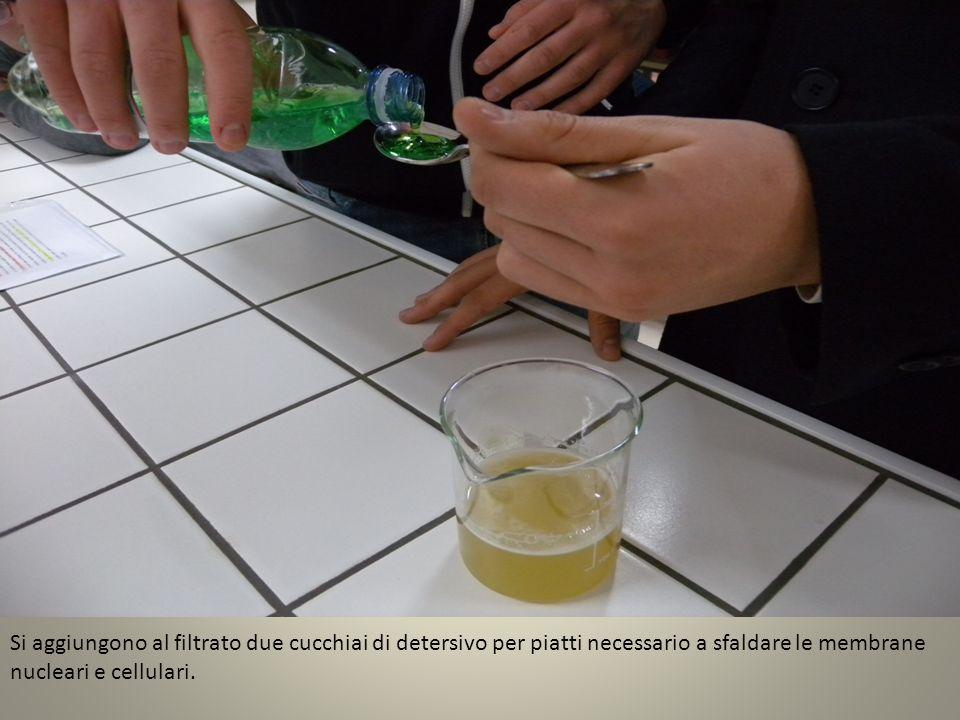 Si aggiungono al filtrato due cucchiai di detersivo per piatti necessario a sfaldare le membrane nucleari e cellulari.