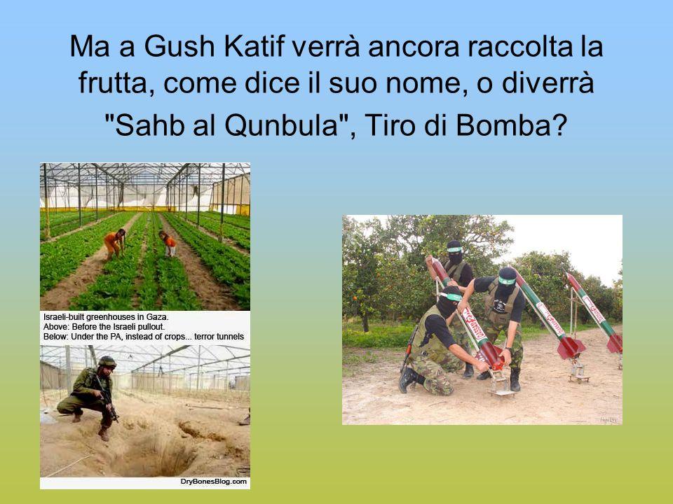Ma a Gush Katif verrà ancora raccolta la frutta, come dice il suo nome, o diverrà