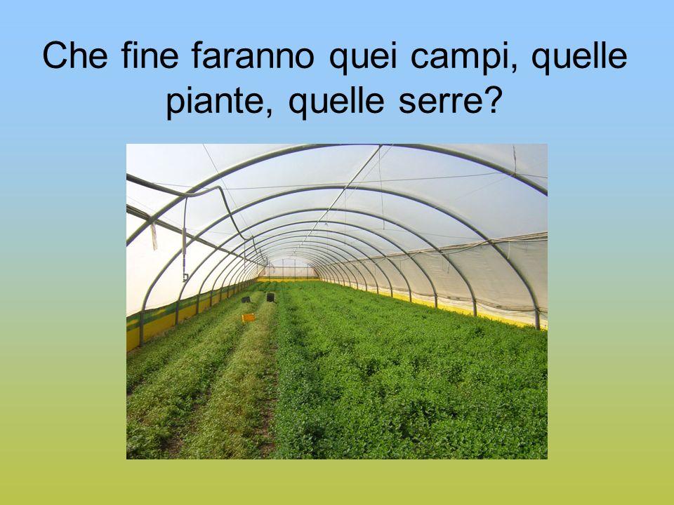 Che fine faranno quei campi, quelle piante, quelle serre?