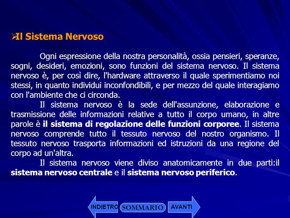 Il Sistema Nervoso Ogni espressione della nostra personalità, ossia pensieri, speranze, sogni, desideri, emozioni, sono funzioni del sistema nervoso.