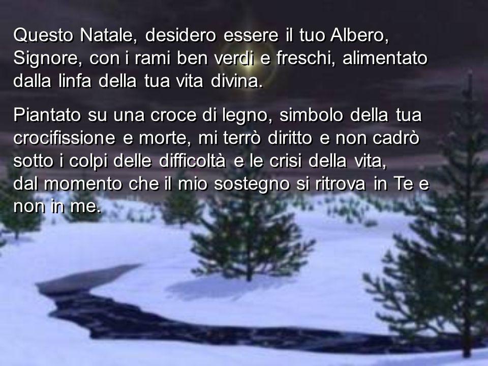 Questo Natale, desidero essere il tuo Albero, Signore, con i rami ben verdi e freschi, alimentato dalla linfa della tua vita divina.