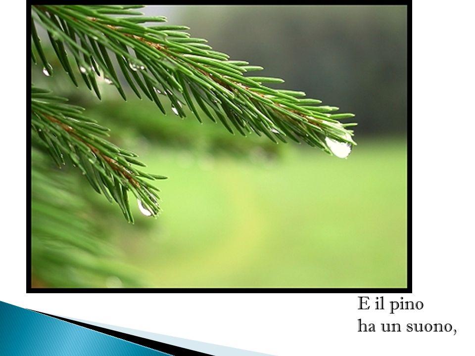 E il pino ha un suono,
