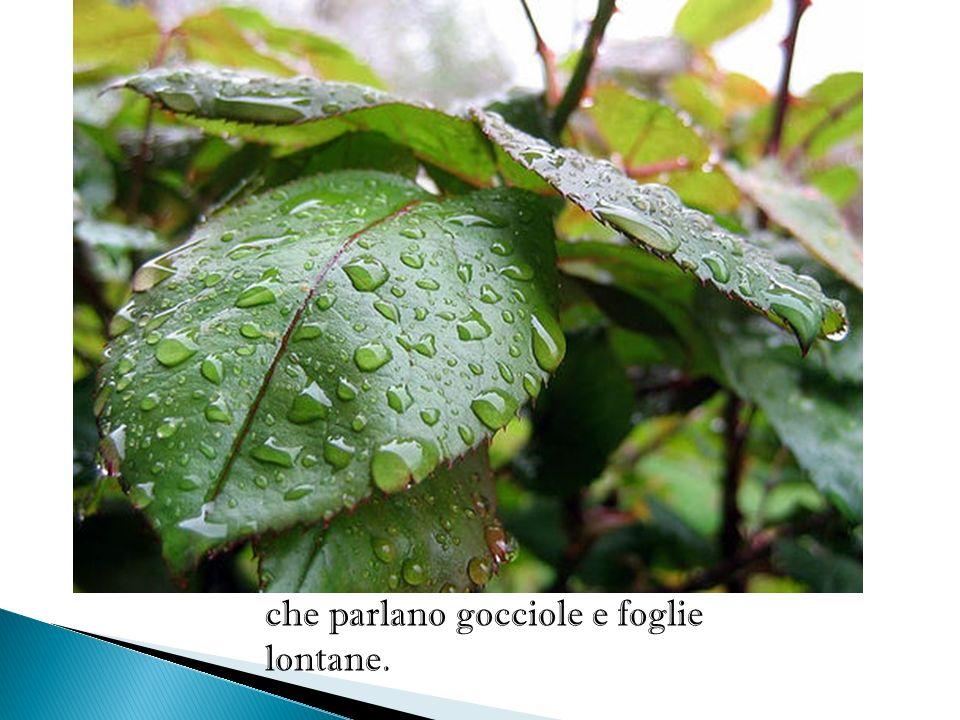 Odi? La pioggia cade su la solitaria verdura