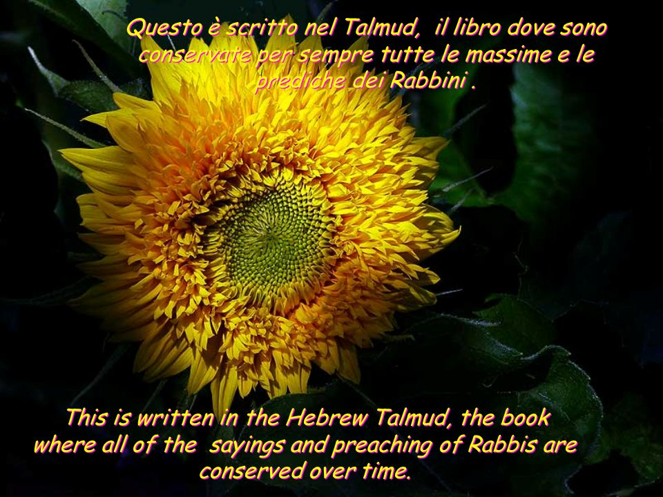 This is written in the Hebrew Talmud, the book where all of the sayings and preaching of Rabbis are conserved over time.