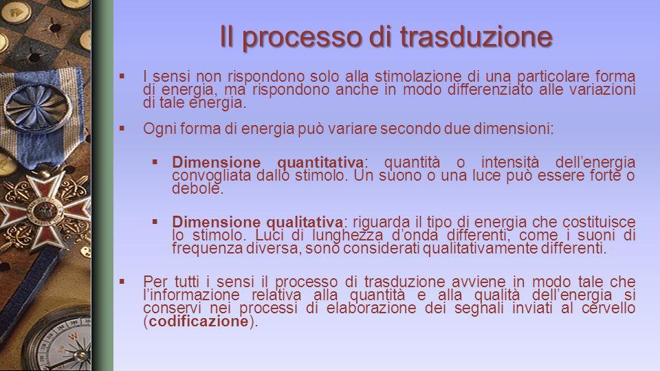 Il processo di trasduzione I sensi non rispondono solo alla stimolazione di una particolare forma di energia, ma rispondono anche in modo differenziat