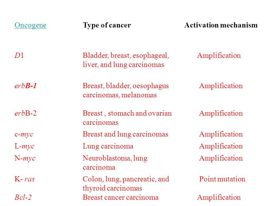 OncogeneType of cancerActivation mechanism D1D1Bladder, breast, esophageal, liver, and lung carcinomas Amplification erbB-1 erbB-2 Breast, bladder, oe