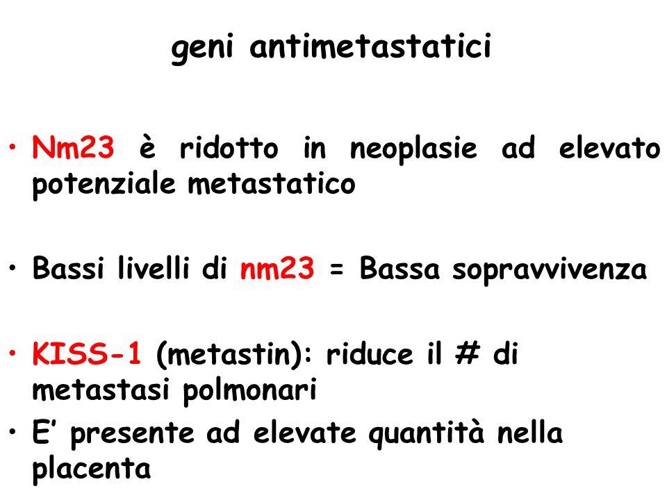 geni antimetastatici Nm23 è ridotto in neoplasie ad elevato potenziale metastatico Bassi livelli di nm23 = Bassa sopravvivenza KISS-1 (metastin): ridu