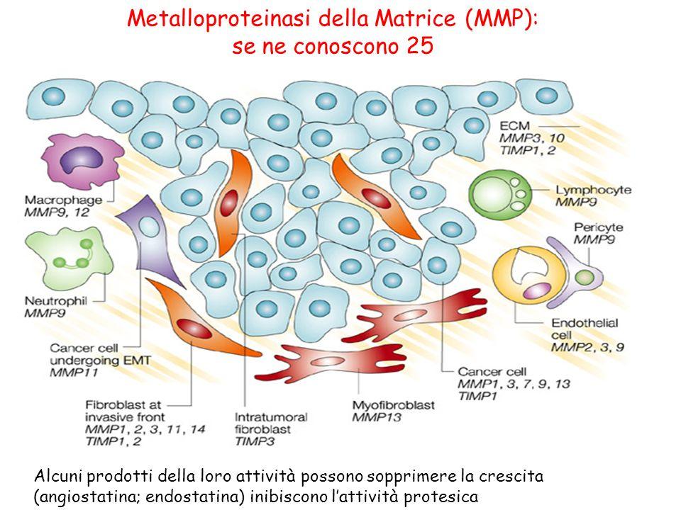 Metalloproteinasi della Matrice (MMP): se ne conoscono 25 Alcuni prodotti della loro attività possono sopprimere la crescita (angiostatina; endostatin
