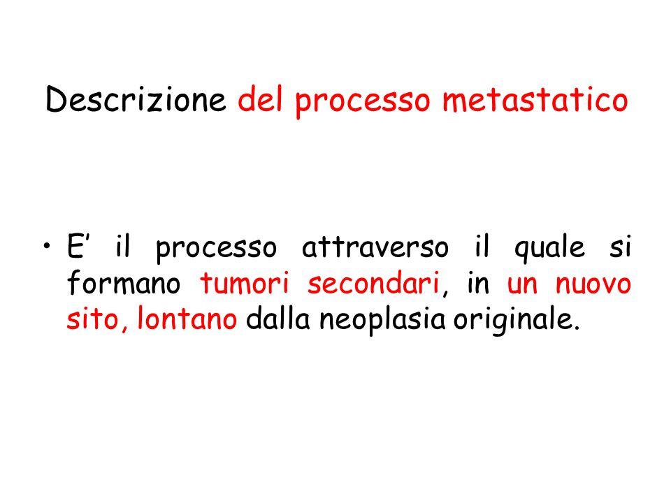 Descrizione del processo metastatico E il processo attraverso il quale si formano tumori secondari, in un nuovo sito, lontano dalla neoplasia original