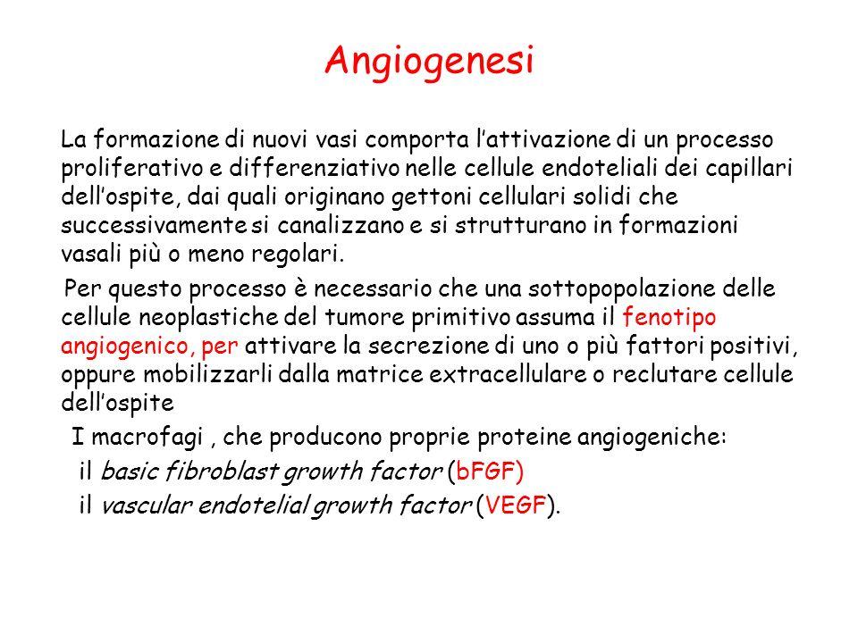 Angiogenesi La formazione di nuovi vasi comporta lattivazione di un processo proliferativo e differenziativo nelle cellule endoteliali dei capillari d