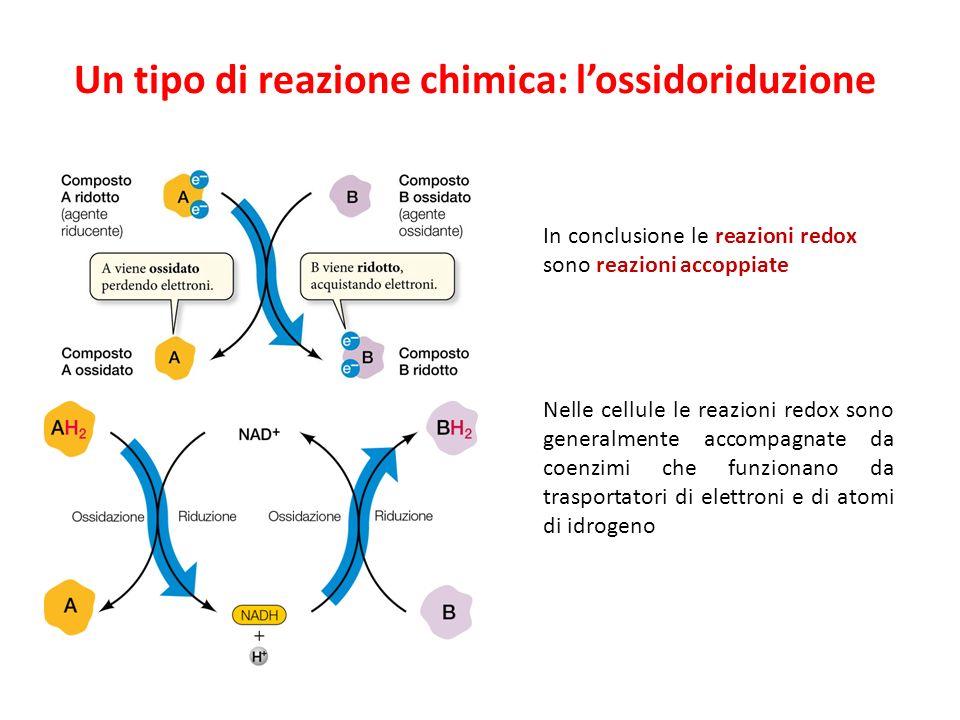 Un tipo di reazione chimica: lossidoriduzione Nelle cellule le reazioni redox sono generalmente accompagnate da coenzimi che funzionano da trasportatori di elettroni e di atomi di idrogeno In conclusione le reazioni redox sono reazioni accoppiate