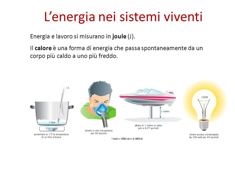 Lenergia nei sistemi viventi Energia e lavoro si misurano in joule (J).