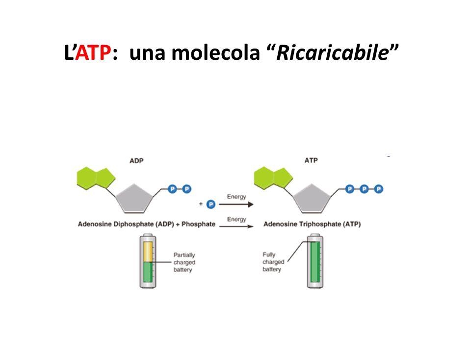 LATP: una molecola Ricaricabile