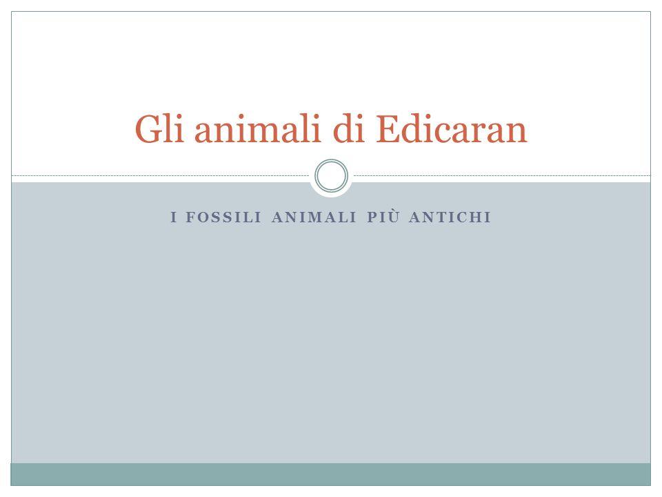 I FOSSILI ANIMALI PIÙ ANTICHI Gli animali di Edicaran
