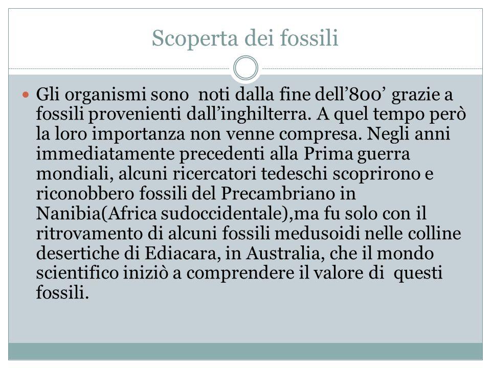 Scoperta dei fossili Gli organismi sono noti dalla fine dell800 grazie a fossili provenienti dallinghilterra.
