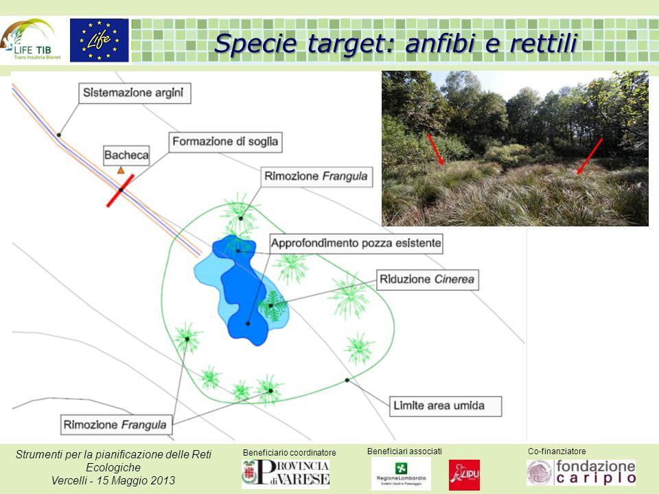 Beneficiario coordinatore Beneficiari associatiCo-finanziatore Strumenti per la pianificazione delle Reti Ecologiche Vercelli - 15 Maggio 2013 Specie target: anfibi e rettili