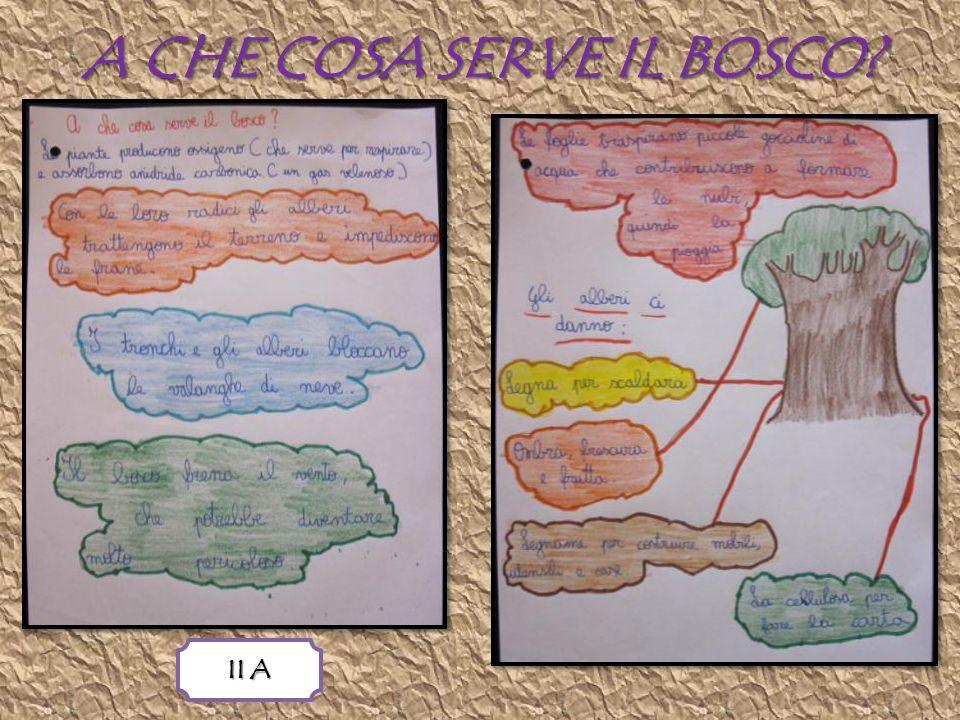 A CHE COSA SERVE IL BOSCO? II A