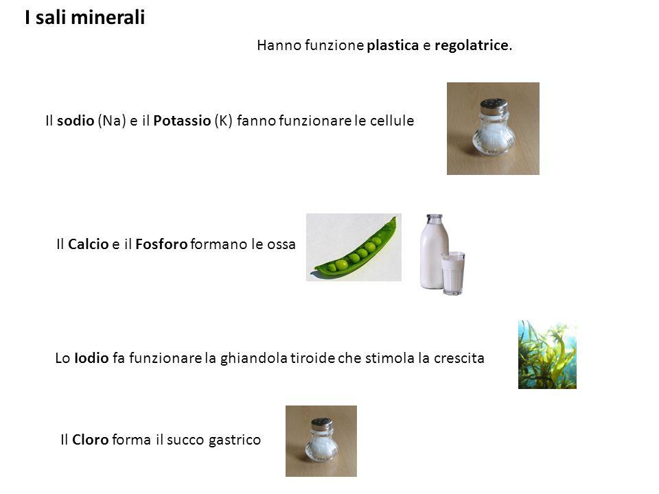 I sali minerali Hanno funzione plastica e regolatrice. Il sodio (Na) e il Potassio (K) fanno funzionare le cellule Il Calcio e il Fosforo formano le o
