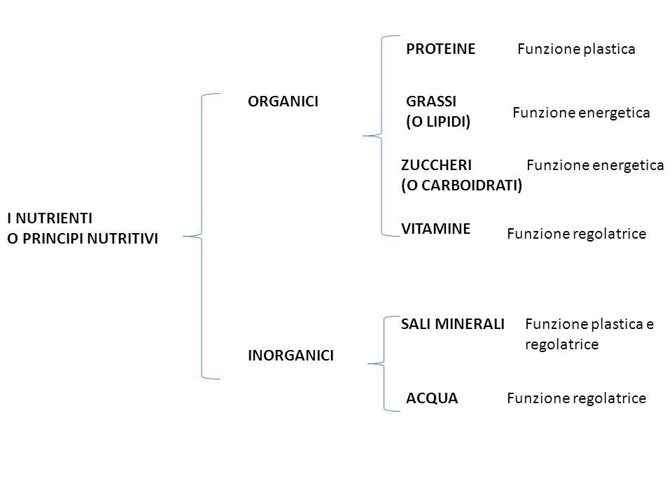 I NUTRIENTI O PRINCIPI NUTRITIVI ORGANICI INORGANICI PROTEINE GRASSI (O LIPIDI) ZUCCHERI (O CARBOIDRATI) VITAMINE SALI MINERALI ACQUA Funzione plastic