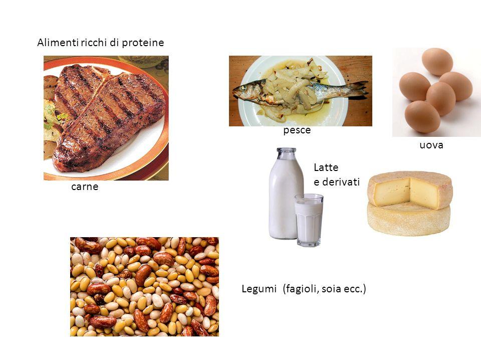 Alimenti ricchi di proteine Legumi (fagioli, soia ecc.) Latte e derivati pesce uova carne