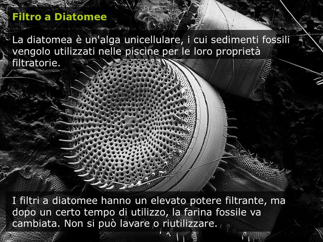 Filtro a Diatomee La diatomea è un'alga unicellulare, i cui sedimenti fossili vengolo utilizzati nelle piscine per le loro proprietà filtratorie. I fi