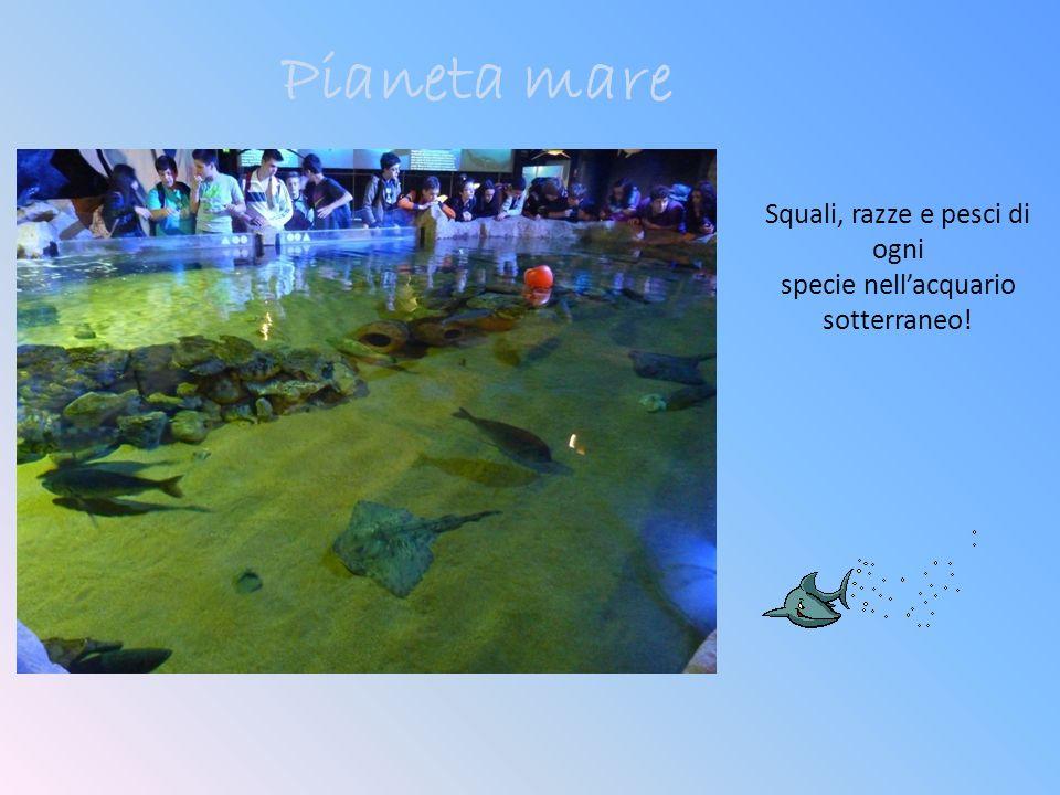 Pianeta mare Squali, razze e pesci di ogni specie nellacquario sotterraneo!