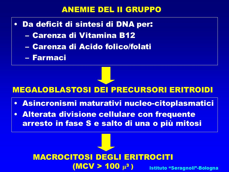 Istituto Seragnoli-Bologna ANEMIE DEL II GRUPPO Da deficit di sintesi di DNA per : –Carenza di Vitamina B12 –Carenza di Acido folico/folati –Farmaci M