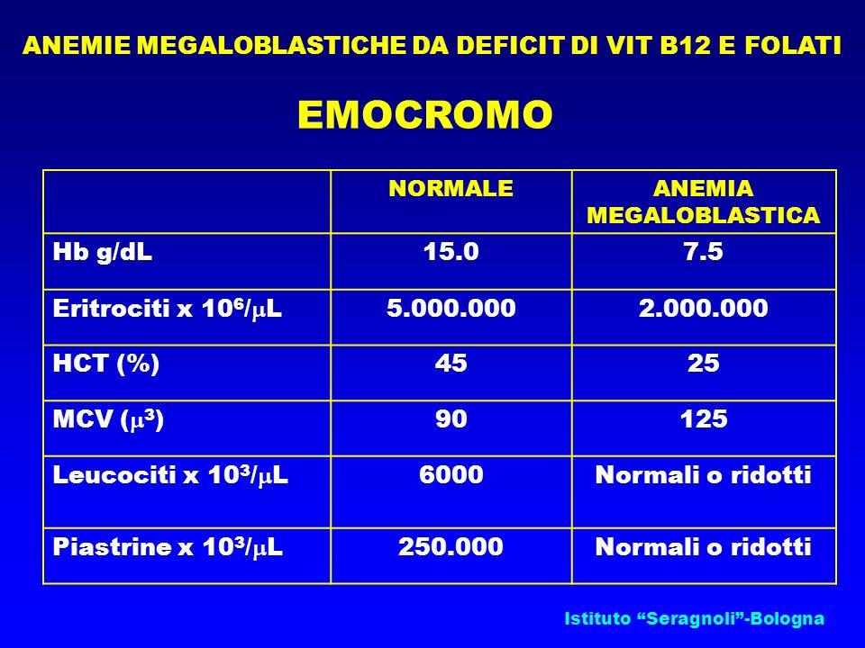Istituto Seragnoli-Bologna ANEMIE MEGALOBLASTICHE DA DEFICIT DI VIT B12 E FOLATI EMOCROMO NORMALEANEMIA MEGALOBLASTICA Hb g/dL15.07.5 Eritrociti x 10