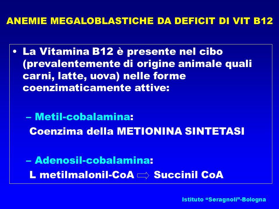Istituto Seragnoli-Bologna ANEMIE MEGALOBLASTICHE DA DEFICIT DI VIT B12 La Vitamina B12 è presente nel cibo (prevalentemente di origine animale quali