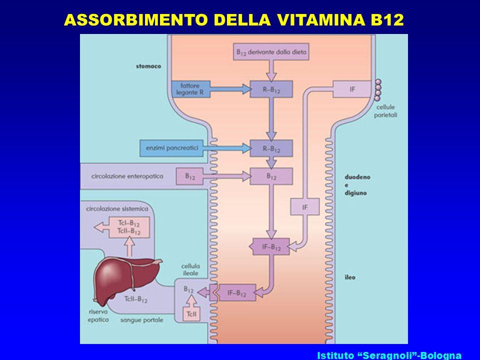 Istituto Seragnoli-Bologna ASSORBIMENTO DELLA VITAMINA B12