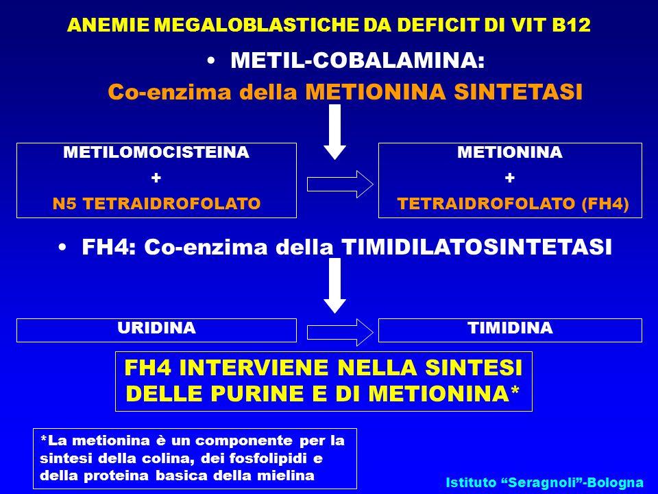 Istituto Seragnoli-Bologna ANEMIE MEGALOBLASTICHE DA DEFICIT DI VIT B12 METIL-COBALAMINA: Co-enzima della METIONINA SINTETASI METILOMOCISTEINA + N5 TE