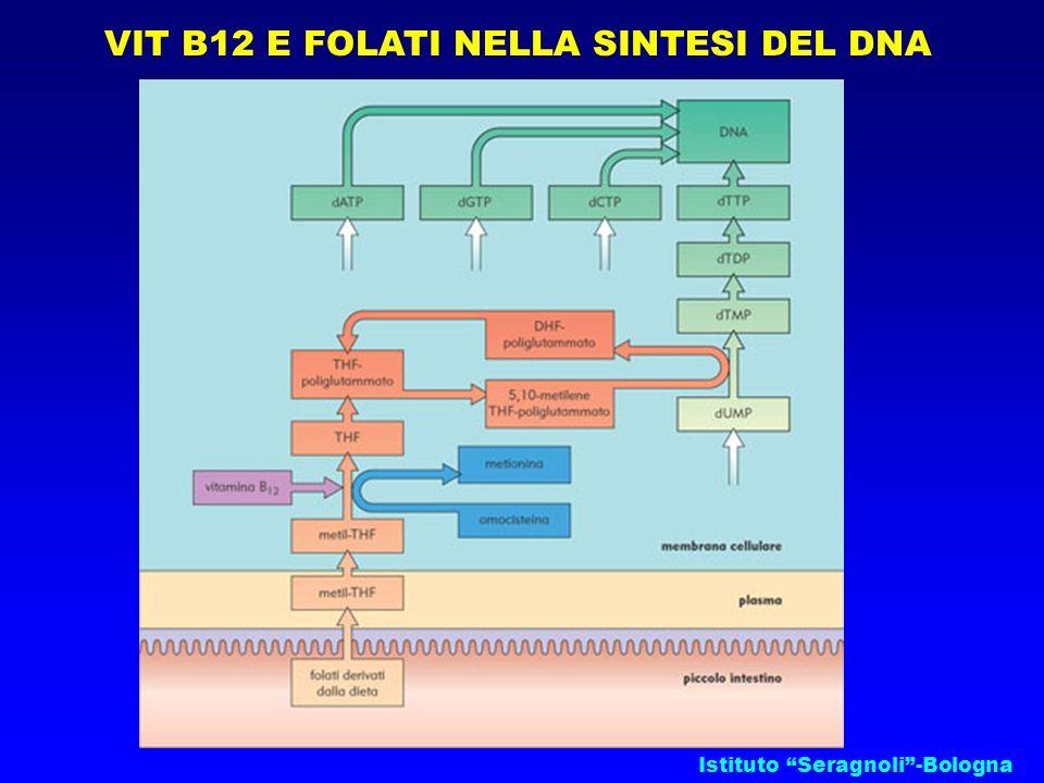 Istituto Seragnoli-Bologna VIT B12 E FOLATI NELLA SINTESI DEL DNA