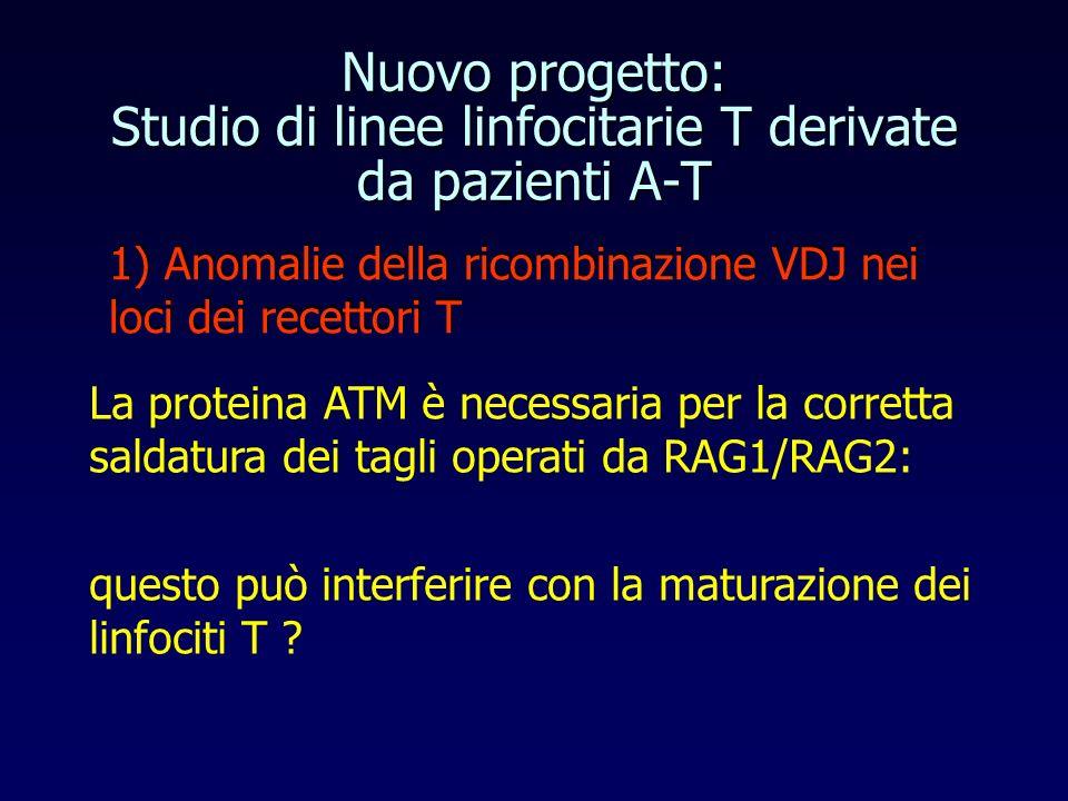 Nuovo progetto: Studio di linee linfocitarie T derivate da pazienti A-T 1) Anomalie della ricombinazione VDJ nei loci dei recettori T La proteina ATM è necessaria per la corretta saldatura dei tagli operati da RAG1/RAG2: questo può interferire con la maturazione dei linfociti T ?